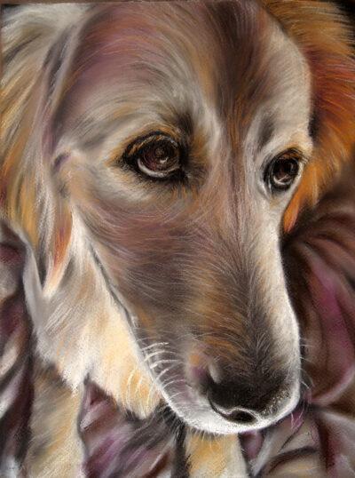 Beau by Gianna Lapini, Chalk Pastel