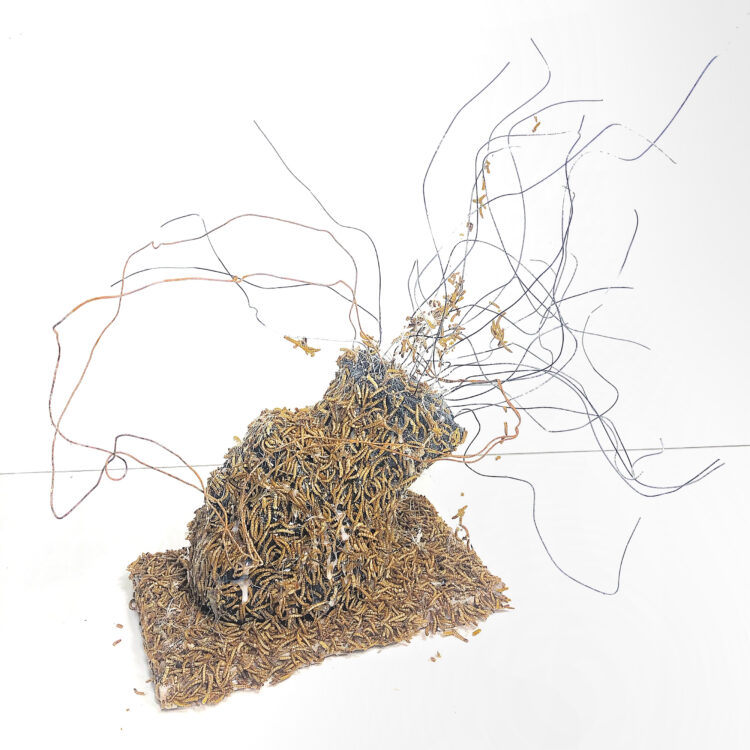 Inevitable by Natalia Millman, Acrylic, maggots, wire, glue